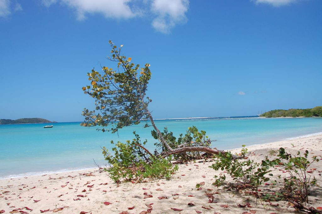 Paradise Beach, Carriacou