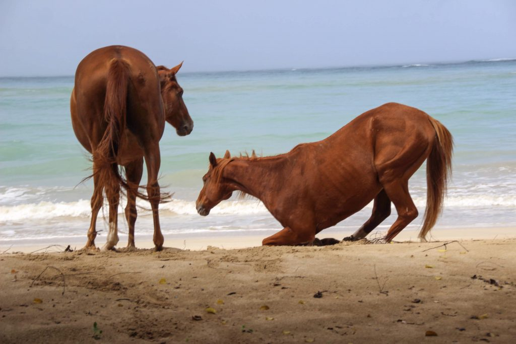 Being with Horses in Buccoo, Tobago