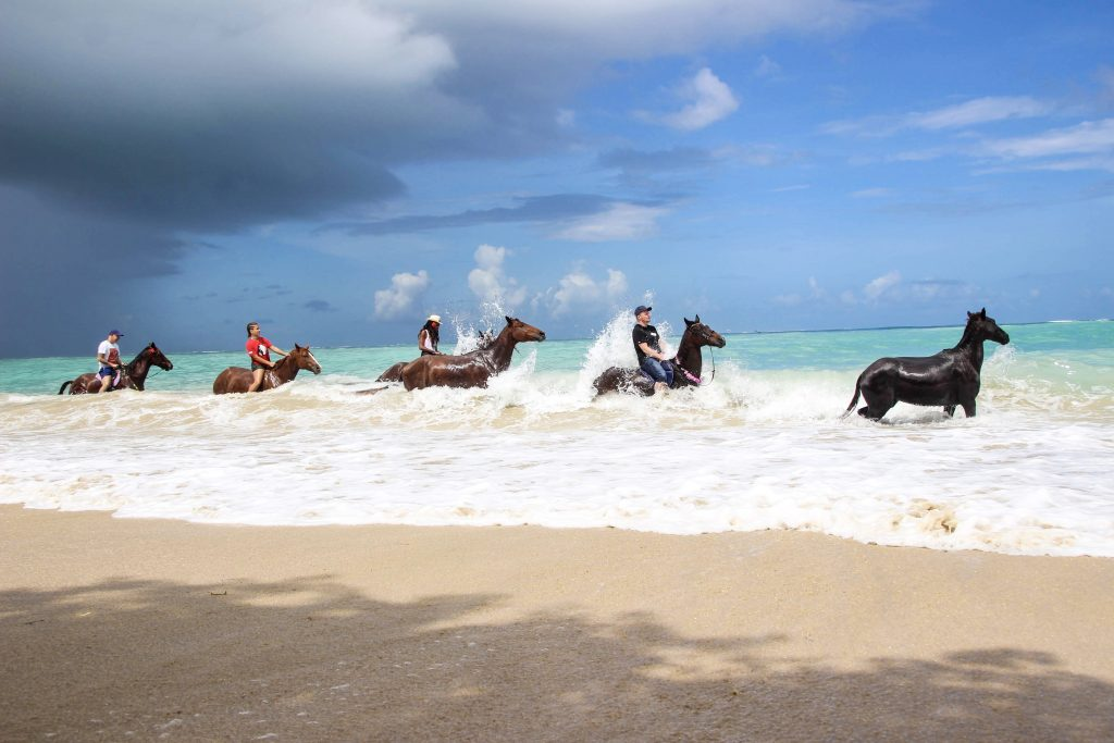 Being with Horses at Buccoo Bay