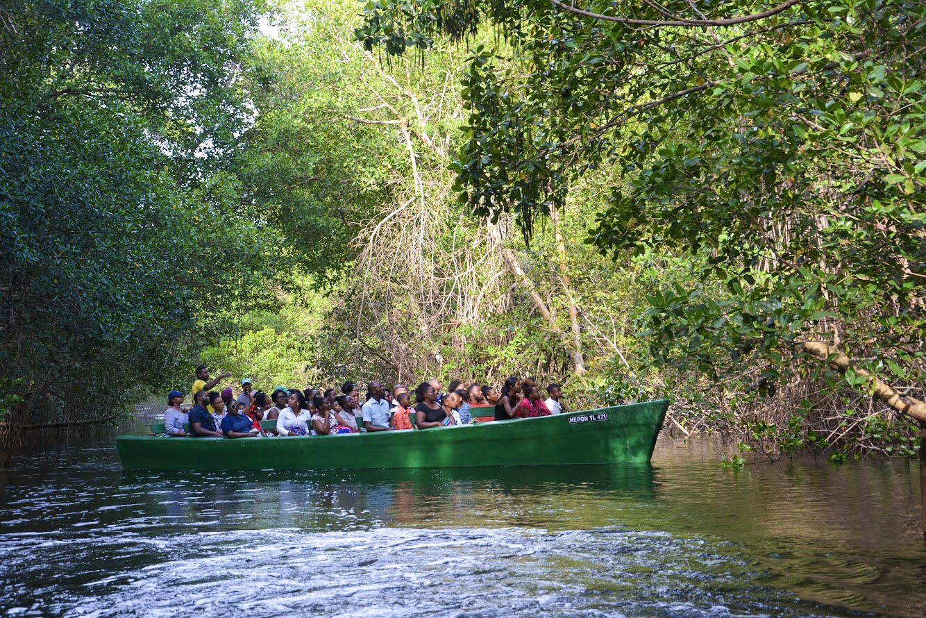 Caroni Swamp Tour: Here's What You need to Know